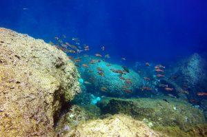 Parrotfish at Dwejra