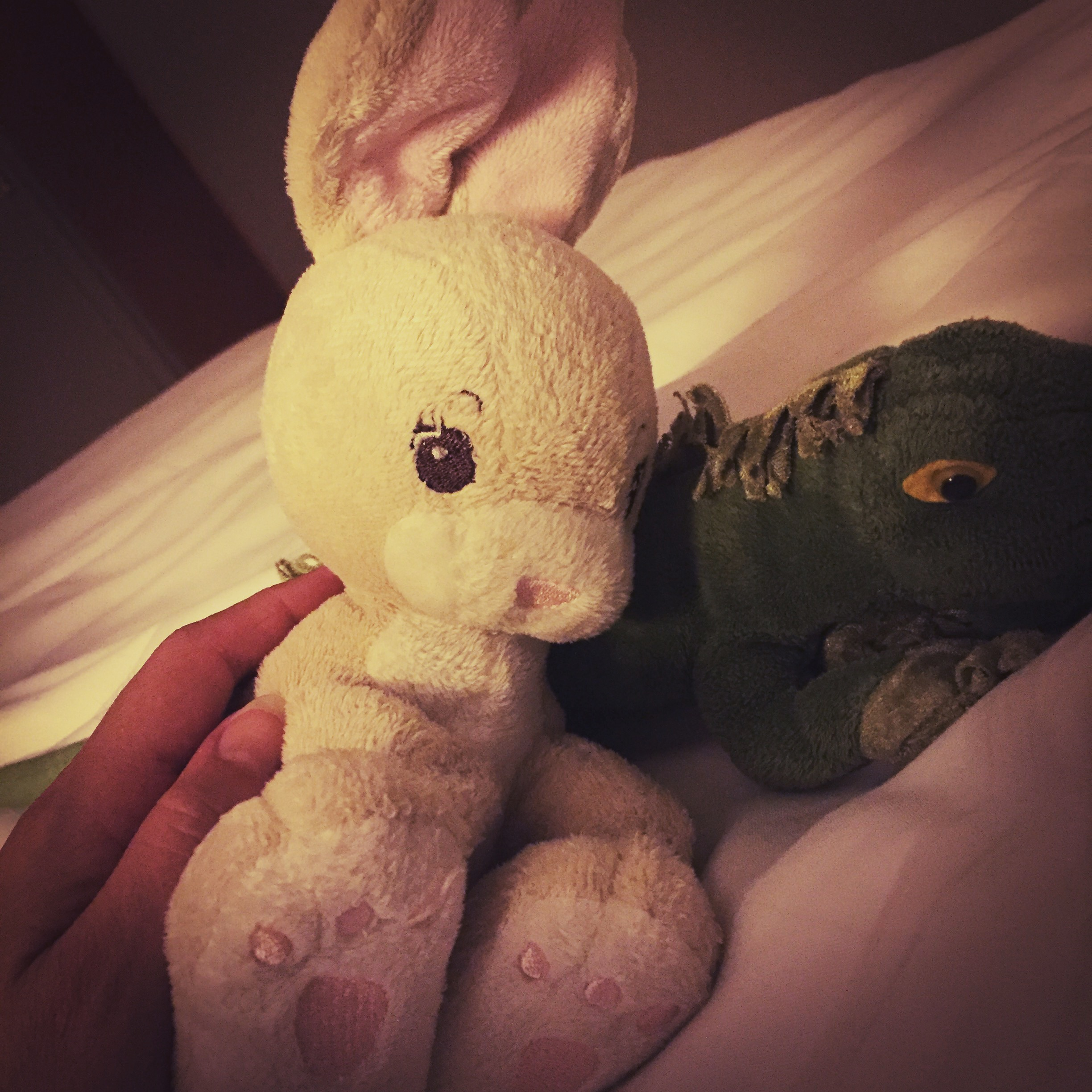 Miss Bunny & Iggy for company while I'm away