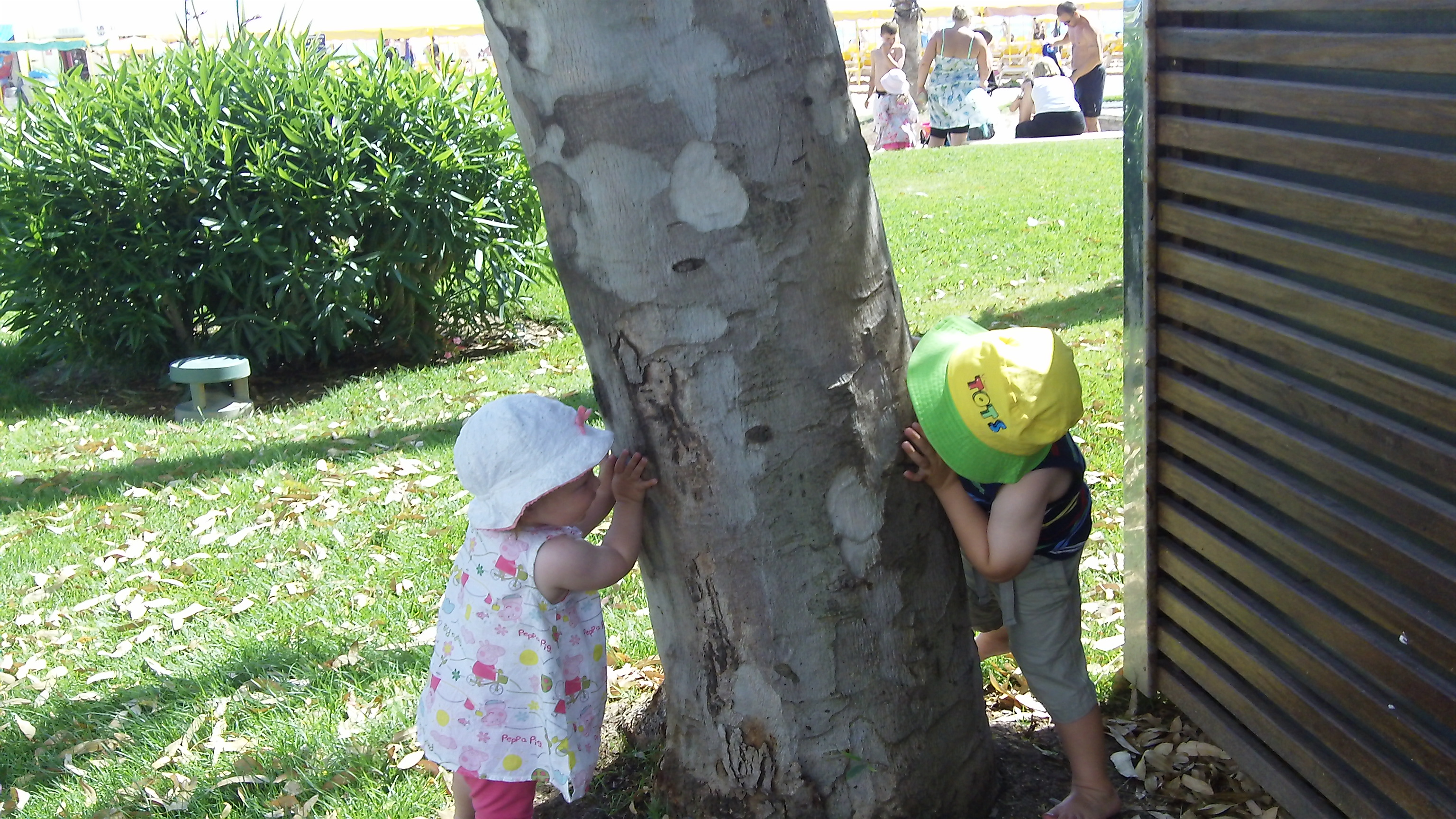 Kids hiding tree